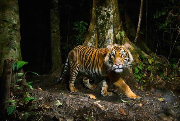 Sumatra wildlife