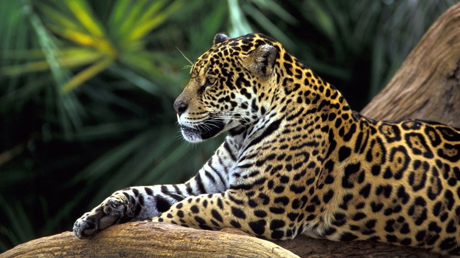 deforestation is taking Latin America's biodiversity with it.