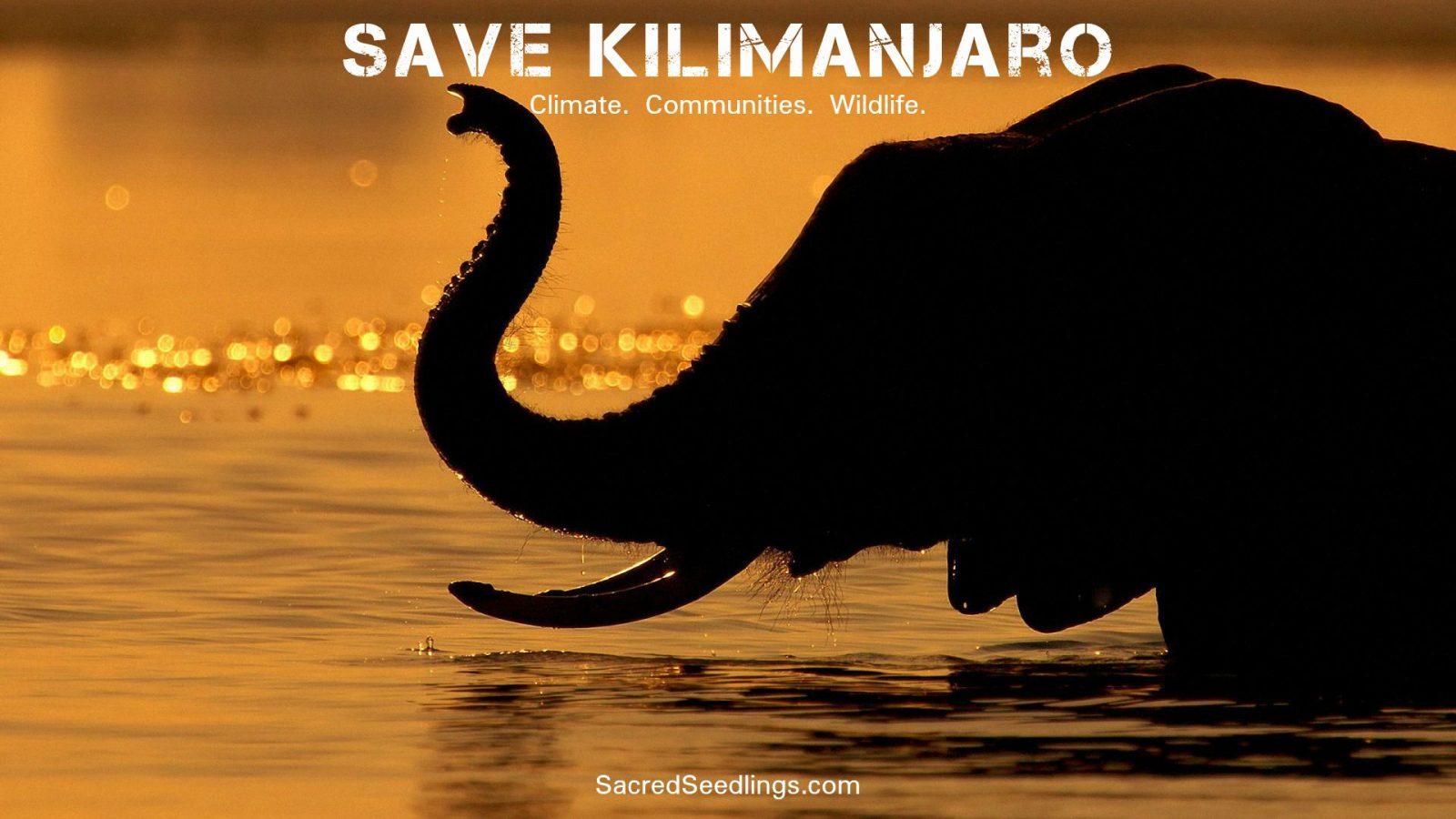 elephant conservation Tanzania